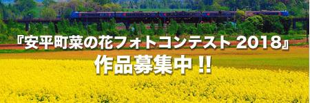 安平町菜の花フォトコンテスト2018